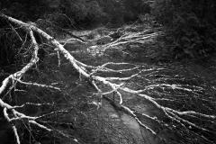 Pine-River-No.-25-2008